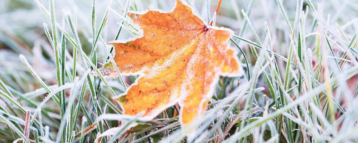 Maple leaf with frost on it