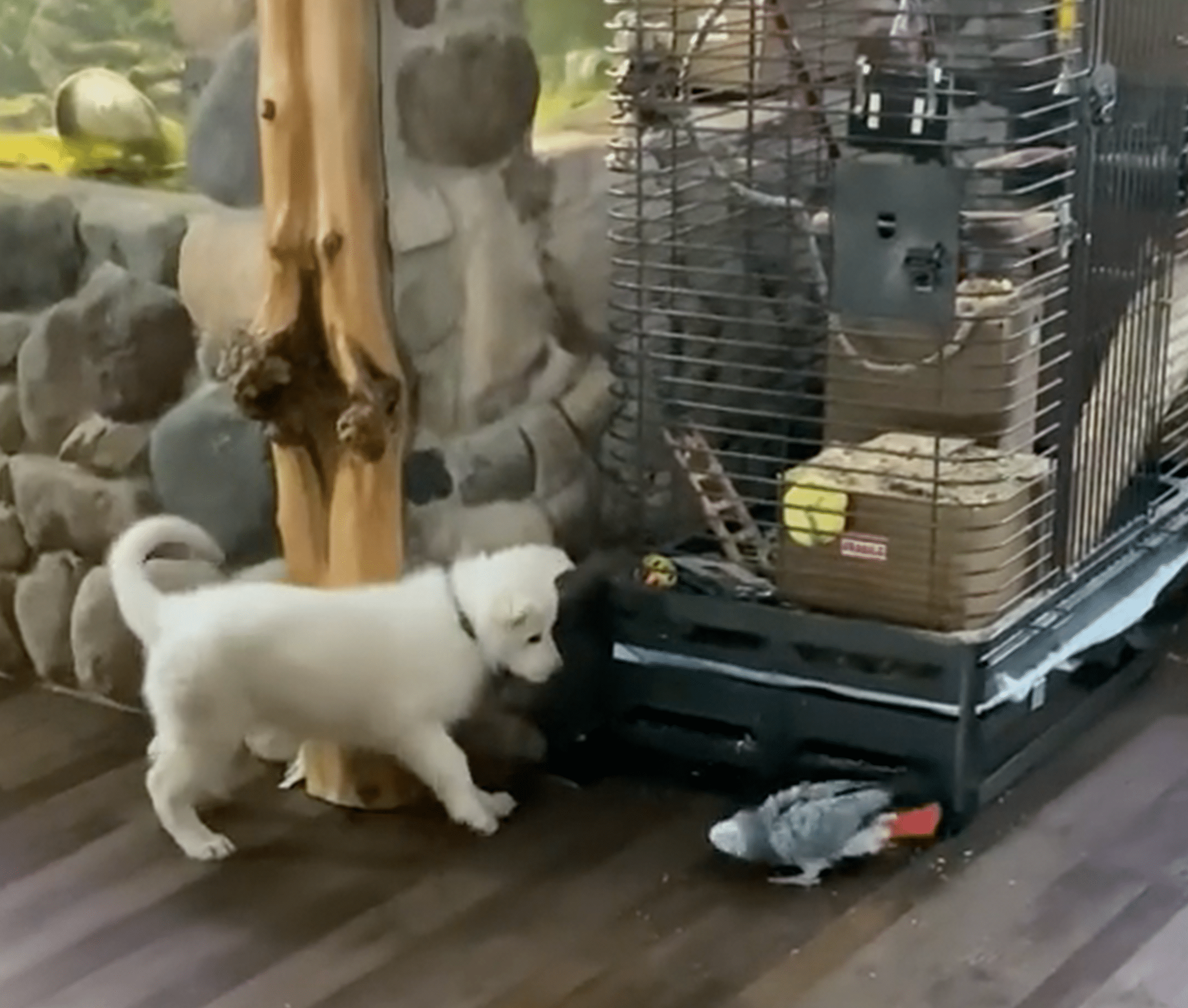 Stanley Genadek spending time with his pets between work.